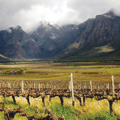 Discovering the Wines of South Africa