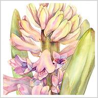 Botanicals in Watercolor