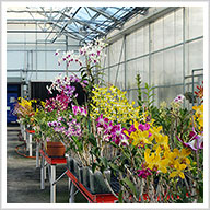 The Smithsonian Greenhouses and How They Grow