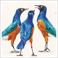 Bird Brains: How Birds Talk, Work, Play, Parent, and Think