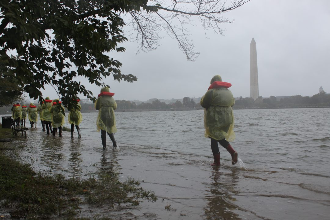 Gallery Experience: Artists + Climate Change