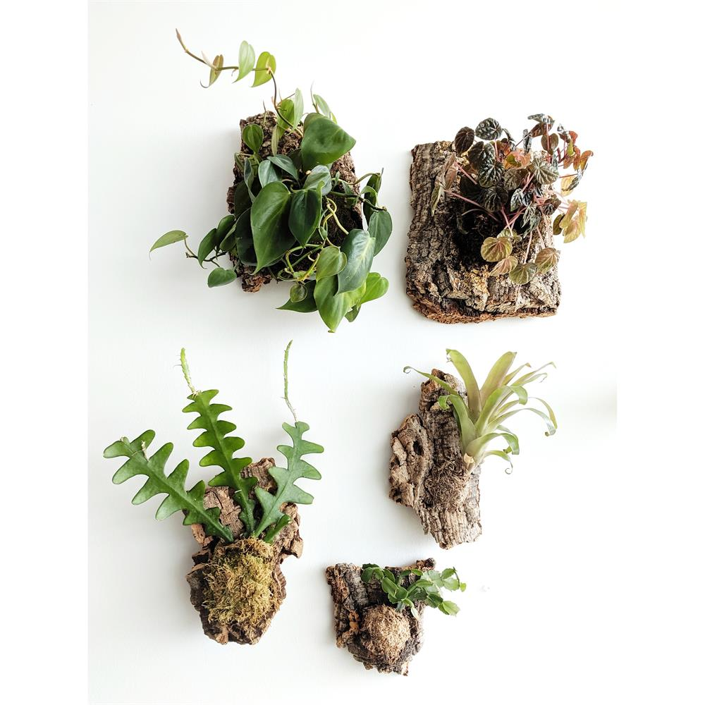 Beyond the Studio Workshop: Plant Mounting with Alicia Mazzara and Cielo Contreras