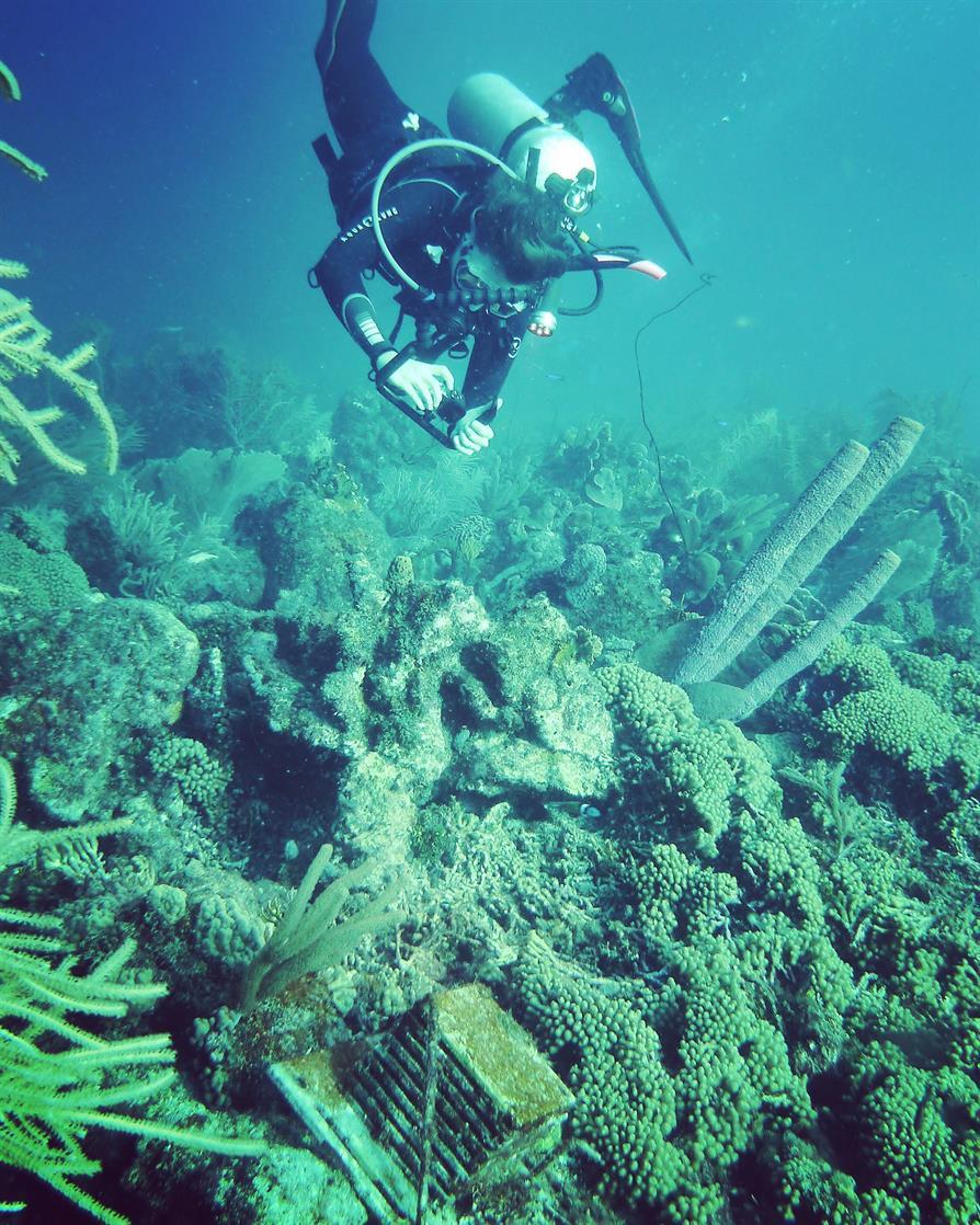 Teacher Tuesday: Take a Deep Dive into the Ocean Portal Website