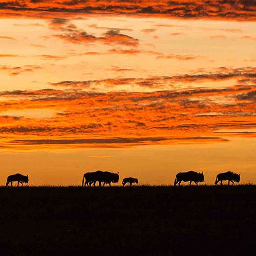 Russell Gammon's Africa: Take a Virtual Walk on the Wild Side