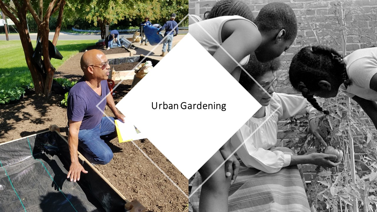 Urban Gardening Workshop:  Looking to the Fall