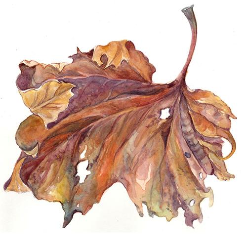 Botanicals in Watercolor II