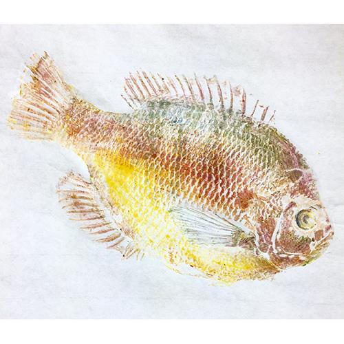 Gyotaku II: Fish-printing Hawaiian Style