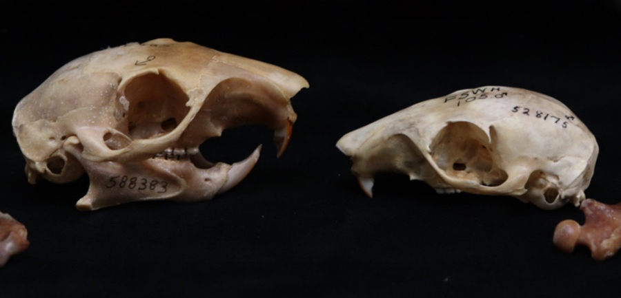 The Expert Is In: The Mammal Collection's Spookiest Specimens