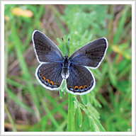 The Language of Butterflies: A Message of Hope