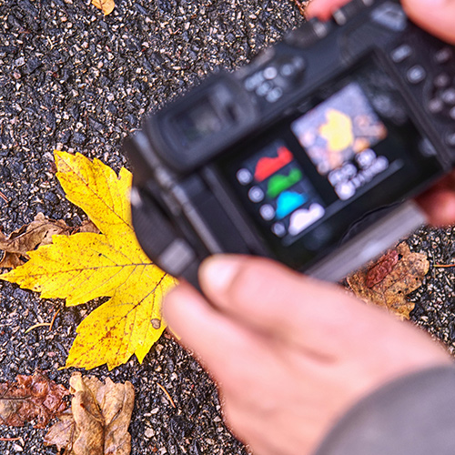 Photo 101: Exposures and Histograms